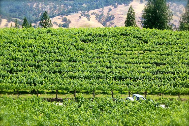 Beautiful view of El Dorado wine valley