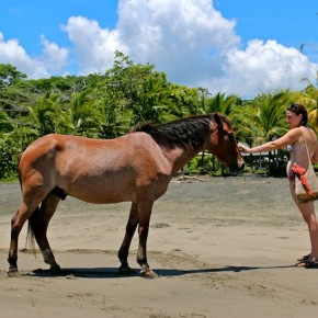 Horses on beach in Puerto Viejo, Costa Rica