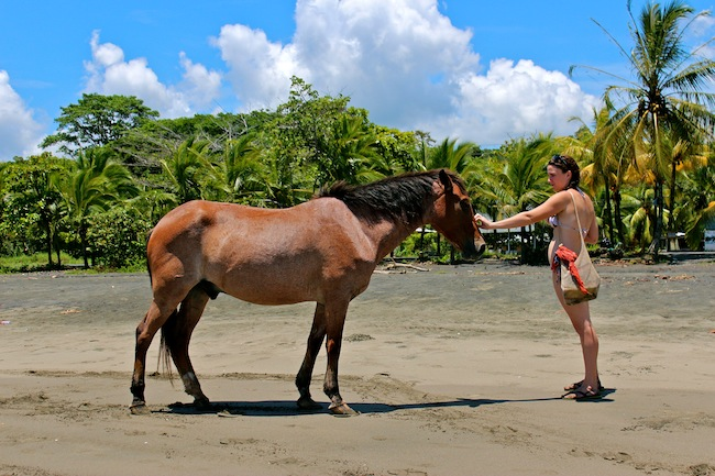 Horses on beach in Puerto Viejo, Costa Rica
