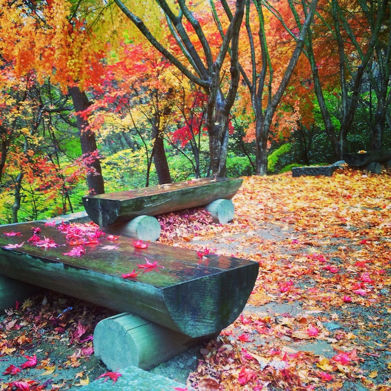 Fall colors in Daegu Korea