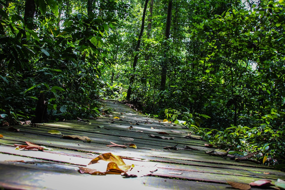 Jungle walk in Borneo