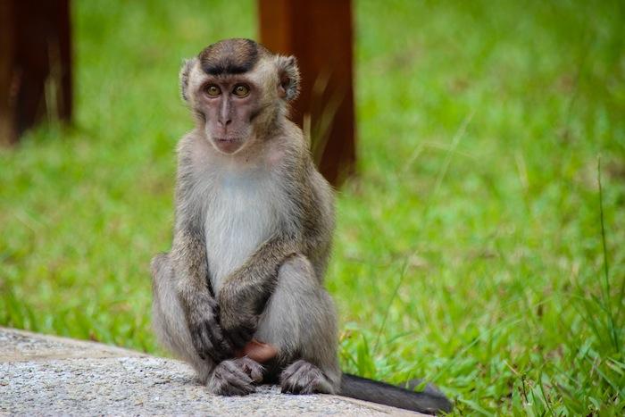 Monkeys in Bako National Park Borneo