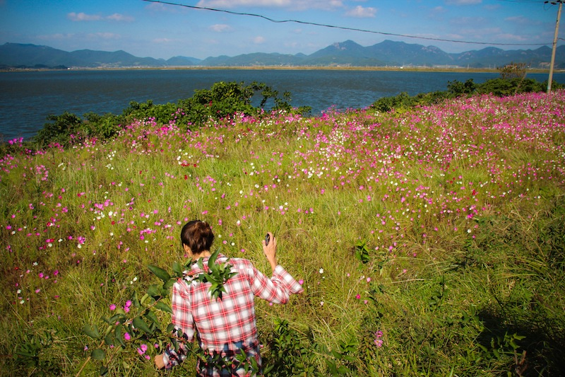 Flower field Goheung Island Korea