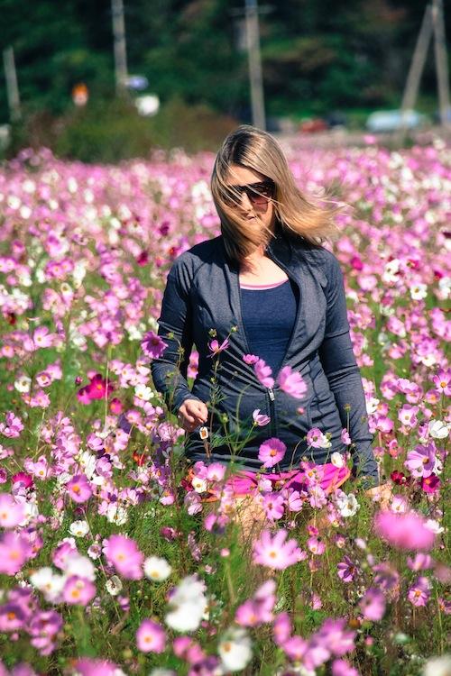 Flower field Goheung Island Korea