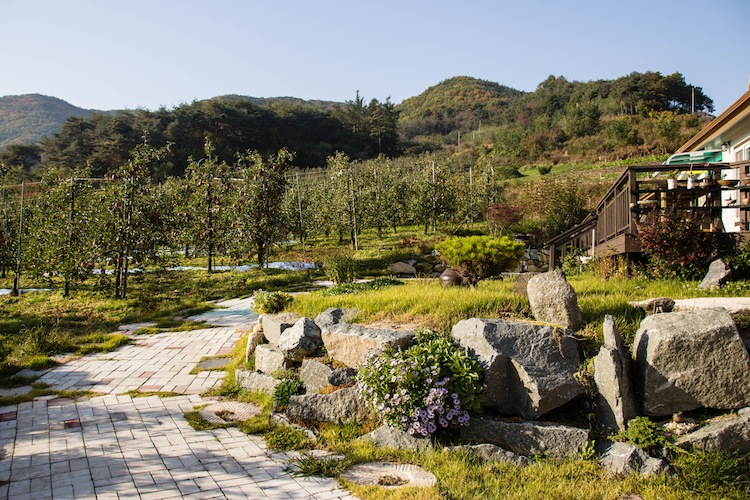 WWOOF farming on apple farm in Korea