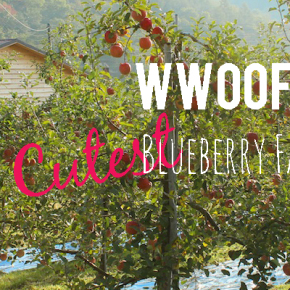 WWOOF farming in Korea