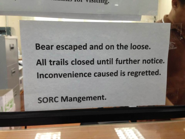 Bear On the Loose
