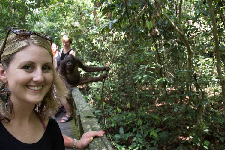Orangutans at Sepilok Orangutan Rehabilitation Center