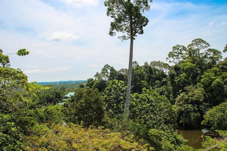 Sandakan Rainforest Discovery Center canopy walk