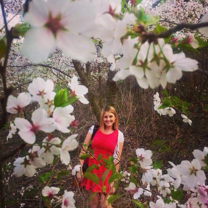 Cherry Blossoms Keimyung Daegu Korea