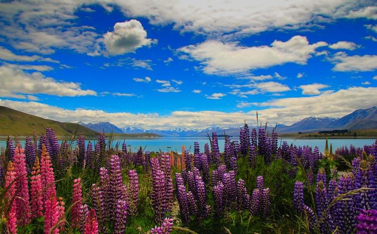 NewZealand flowers