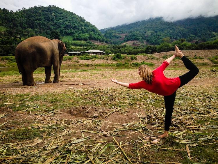 elephant nature park chiang mai