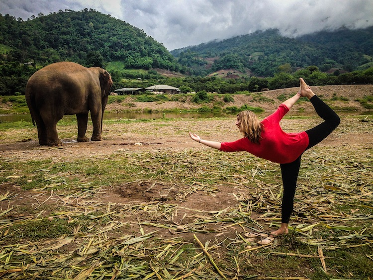 volunteer at Elephant Nature Park
