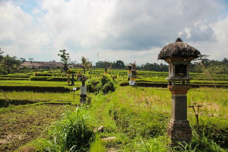 farm in Ubud, Bali