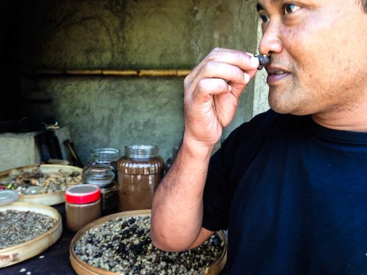 kopi luwak Bali's poop coffee