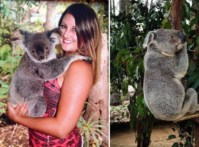 holding a koala lone pine koala sanctuary australia