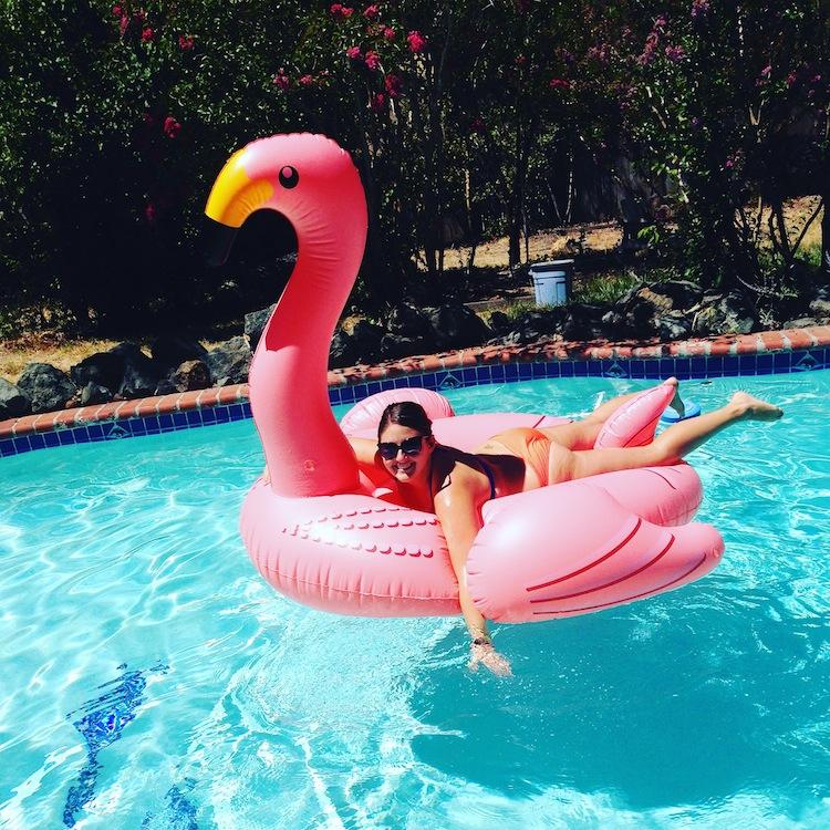 swimming pool flamingo